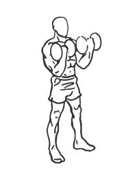 biceps-curl-2