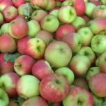 Appels